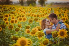 Love couple standing outdoors in sunflower field Stock Photos