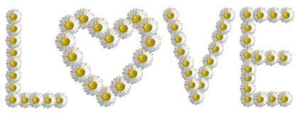 Love Daisy Caption. `LOVE` inscription arranged of daisy flowers. White background stock photo