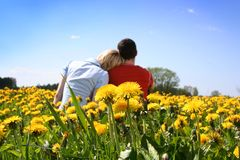 Love in dandelions Royalty Free Stock Photo