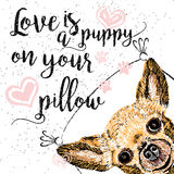 Love is a doggy on your pillow, love quote about dogs. Royalty Free Stock Photo