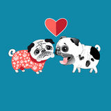 Love dogs pugs Stock Photography