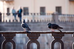 Love and doves. Two doves on foreground and two blurred people on background on the other side of river, cityscape romantic picture Stock Image
