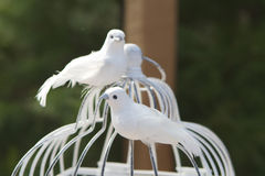 Love Doves Royalty Free Stock Photos