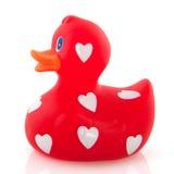 Love duck Stock Photos