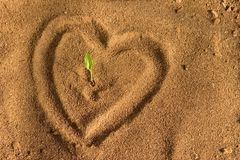 Love earth. Seedling sprouting in fertile soil heart shape royalty free stock photos
