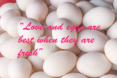 Love and eggs are best when they are fresh phrase Stock Image