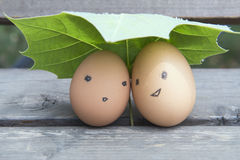 The love of eggs. Under the leaves of the eggs Stock Photo