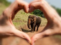 Love of Elephants. Arranged hands in a heart shape symbolizing love for animals royalty free stock photos