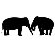 In love elephants. Two elephants love card, isolated objects on white background Stock Image
