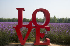 Love, English font, flowers, Verbena Stock Photography