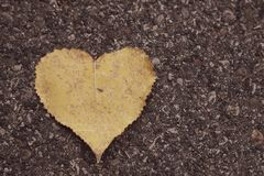 Love is everywhere royalty free stock photos