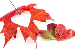 Love fall Royalty Free Stock Photography
