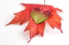 Love fall Royalty Free Stock Image