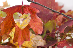 Love Fall with a heart cut into the leaf Stock Photos