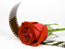'Love film' 2. Gorgeous red Rose with film.  ISOLATED Stock Image