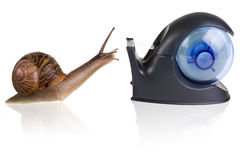 Love at first sight. Garden snail falling in love with a sellotape holder Stock Photos