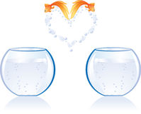 Love fish jump Stock Images
