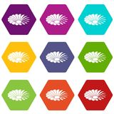 Love flower icons set 9 vector. Love flower icons 9 set coloful isolated on white for web Royalty Free Stock Images