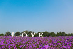 Love flowers Royalty Free Stock Image