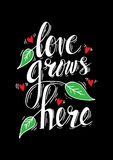 Love grows here. Royalty Free Stock Photography