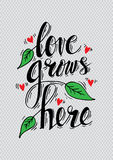 Love grows here. Royalty Free Stock Photo