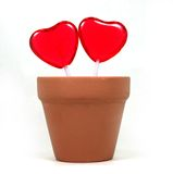 Love Grows Two Hearts. Two candy hearts grow out of a flowerpot royalty free stock photography