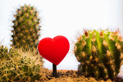 Love and hate. The tender love between the thorns of pain and hatred Royalty Free Stock Images