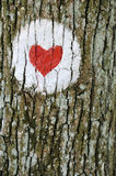 Love heart. Painted on the bark of a tree Royalty Free Stock Photos