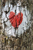 Love heart. Painted on the bark of a tree Royalty Free Stock Image
