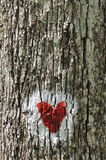Love heart. Painted on the bark of a tree Stock Photo
