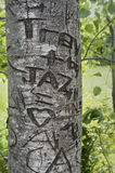 Love heart carved on the tree in Lover's Lane, Green Gables Heritage Place, home of the famous writer Lucy Maud Montgomery, auth Royalty Free Stock Image