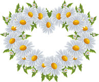 Love, heart of daisies Royalty Free Stock Images