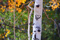Love heart and initials on a tree Stock Photography