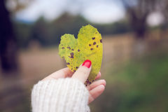 Love heart leaf. Hand holding a love heart made of an yellow autumn leaf Stock Photo