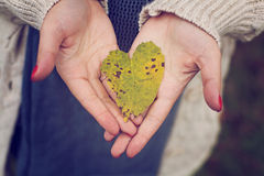 Love heart leaf. Hands holding a love heart made of an yellow autumn leaf Stock Photo