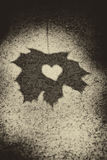 Love heart on leaf shadow Stock Photos