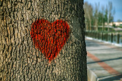 Love heart painted on the bark of a tree. Love red heart painted on the bark of a tree Stock Images