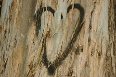 Love. Heart painted on an old eucalyptus bark Royalty Free Stock Photography