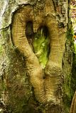 Love heart shape on a tree trunk Royalty Free Stock Photography