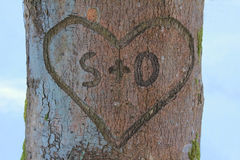 Love heart in tree trunk. Love heart with message in a tree bark stock photos