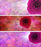 Love hearts and rose website banners. Three different banners with soft love hearts and vivid rose ideal for valentines or mothers day items Royalty Free Stock Photography