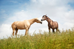 Love of horse Stock Images