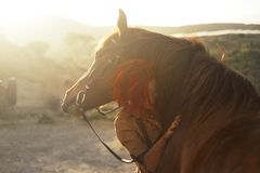 Free Love Horse Animal Pet Therapy Red Hair Young Pretty Woman Hug With Affection Her Best Friend - Sunset Sunlight In Backlight - Royalty Free Stock Photos - 144127778