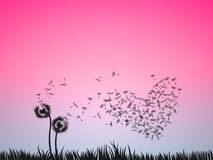 Love illustration concept, two dandelion flowers blow in the pin. K sky. Valentine background for banner, poster, greeting card, or print vector illustration