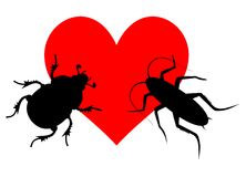 Free Love Insect Stock Photos - 36472363