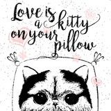 Love is a kitty on your pillow, love quote about pets. Stock Photos
