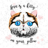 Love is a kitty on your pillow, love quote about pets. Vector outstanding lettering, calligraphy, motivational typography post card. Cute, friendly, smiling Stock Image