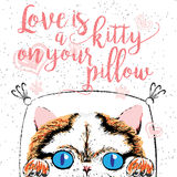 Love is a kitty on your pillow, love quote about pets. Vector outstanding lettering, calligraphy, motivational typography post card. Cute, friendly, smiling Royalty Free Stock Image