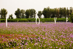 Love and Lavender field Stock Photos