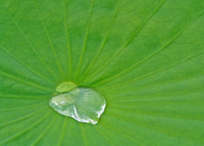 Love on a Leaf Stock Photography